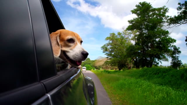 Happy dog in car video
