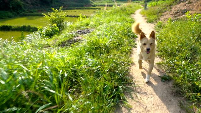 Happy dog walking Happy dog walking leash stock videos & royalty-free footage