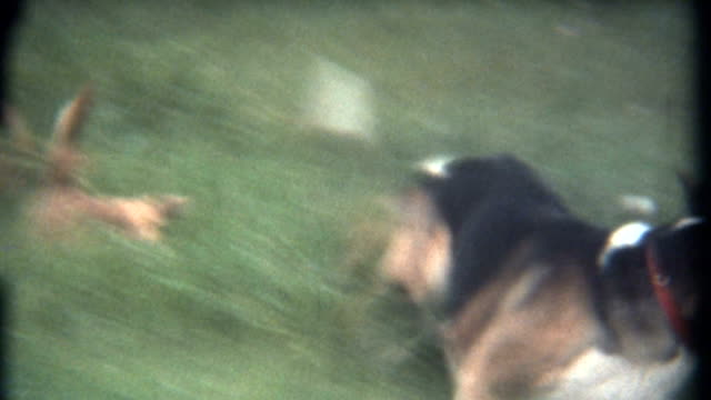 Happy Dogs Home Movie 1960's