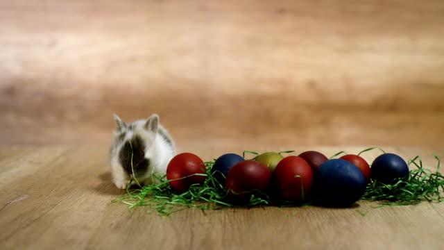 frohe ostern. niedliches kleine häschen spielt in der nähe der bemalten eiern - osterhase stock-videos und b-roll-filmmaterial