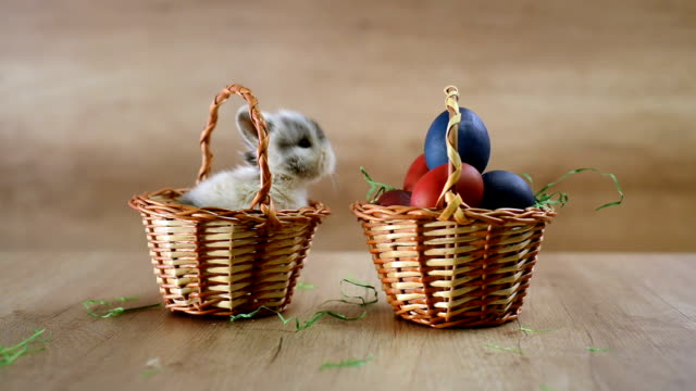 Happy Easter. little bunny and egg basket video
