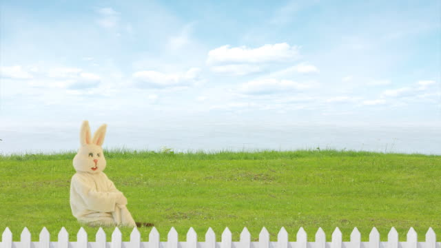 happy ostern rabbit - osterhase stock-videos und b-roll-filmmaterial