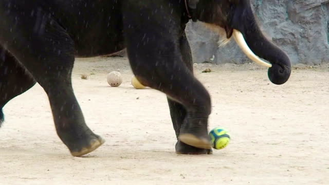 Happy Elephant Playing Soccer video
