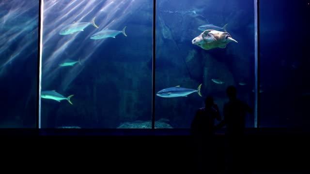 happy family looking at fish and taking pictures - akvarium byggnad för djur i fångenskap bildbanksvideor och videomaterial från bakom kulisserna