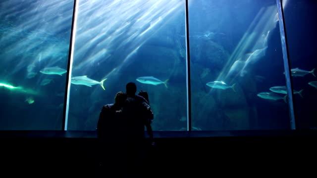 happy family looking at fish - akvarium byggnad för djur i fångenskap bildbanksvideor och videomaterial från bakom kulisserna