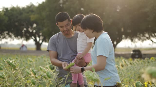 happy family walks little kid girl on his shoulders which spreads hands to sides in crop sunflower