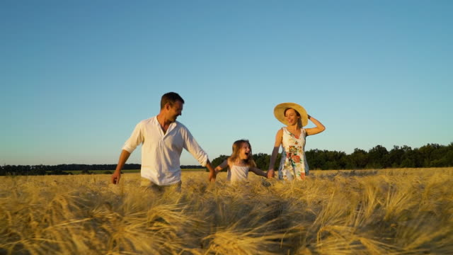 Happy family with little daughter holding hands and running in wheat field video