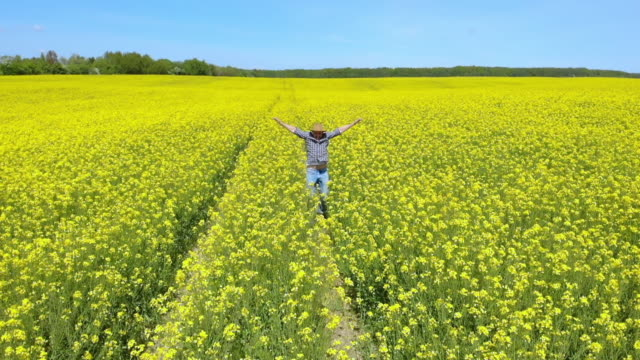 happy farmer in hat jumping in rapeseed field and examining crop. aerial view man running through rapeseed field. cheerful farmer run landscape nature agriculture clean bio energy sky. slow motion. - rancher video stock e b–roll