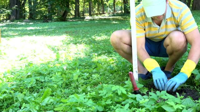Happy farmer man with gloves find dead mole animal in special trap in garden video