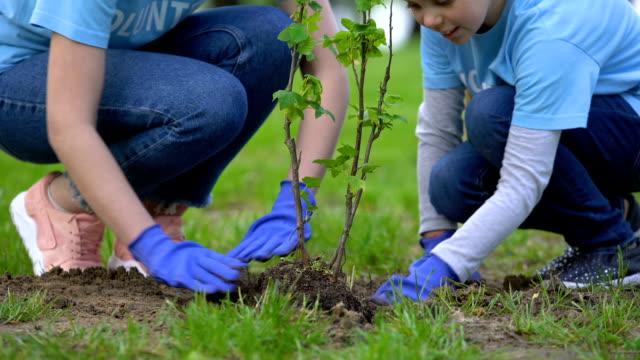 vídeos de stock, filmes e b-roll de voluntário fêmea feliz que sorri à filha que planta a árvore na floresta, ecossistema - voluntário