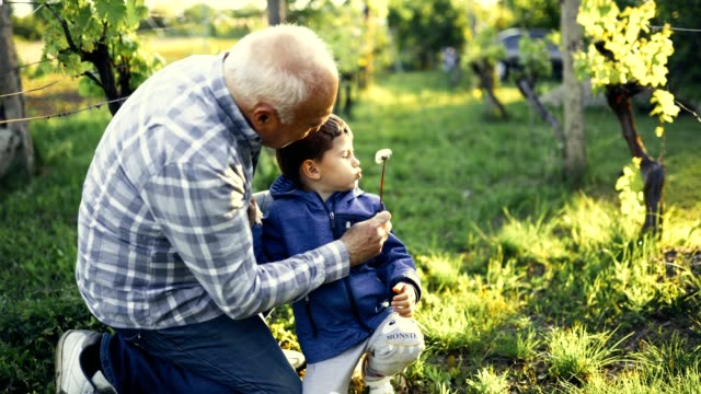 Happy grandpa with grandson blowing dandelions in spring