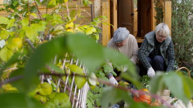 収穫された作物とポーチでポーズを取る幸せな祖父母 - 豊富点の映像素材/bロール