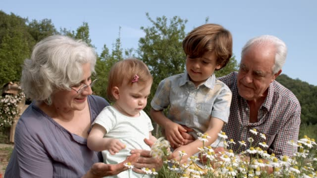 Happy grandparents with children in yard Happy grandparents spending leisure time with grandchildren. Boy is giving daisies to sister in yard. They are enjoying on sunny day. granddaughter stock videos & royalty-free footage