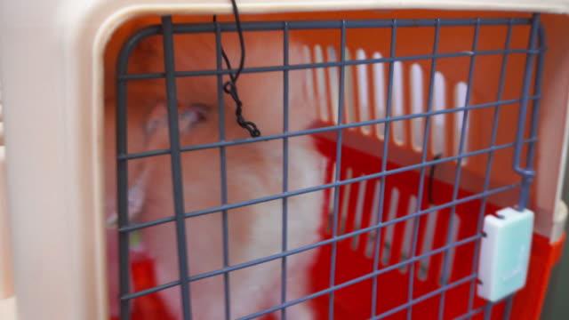 glad glad söt valp inuti liten bur. - djurarm bildbanksvideor och videomaterial från bakom kulisserna