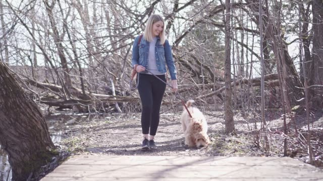 Happy Labradoodle Dog and woman outside at the park A Happy Labradoodle Dog and woman outside at the park setter dog stock videos & royalty-free footage