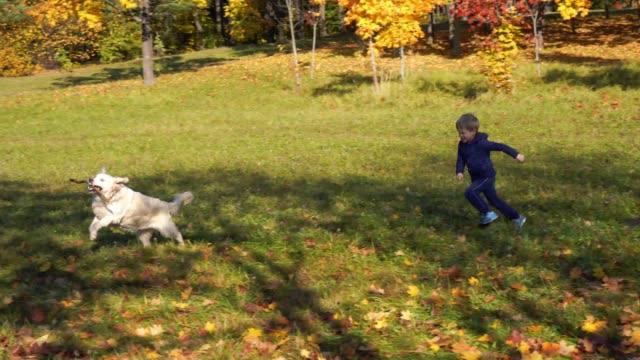 glad liten pojke med europeiskt utseende är att ha kul spela i höst park med en stor vacker hund - hund skog bildbanksvideor och videomaterial från bakom kulisserna