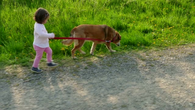 Happy Little Girl Having Fun Walking Dog Pet In Countryside Happy people, family life, lifestyle, leisure, nature, animals, pets, dogs, outdoors recreation. Baby, child, children, kids, little girl walking with her dog, pet, animal and laughing, having fun. 3of8 leash stock videos & royalty-free footage