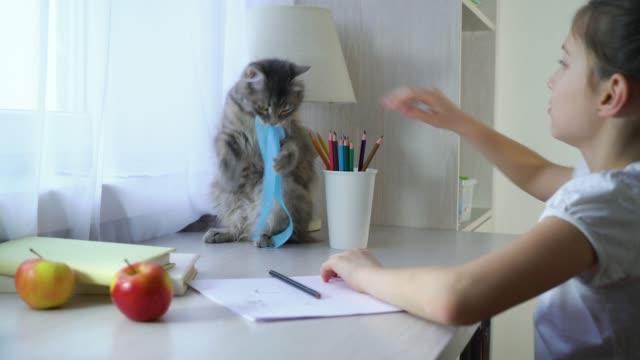 lycklig liten flicka leker med henne sällskaps djur katt och sett på kameran - katt inomhus bildbanksvideor och videomaterial från bakom kulisserna