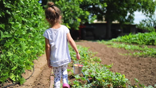 vídeos de stock e filmes b-roll de happy little girl running with strawberry basket in garden. home-grown fruits and vegetables in the countryside - picking fruit
