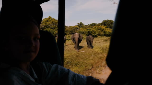 Happy little tourist girl child watching elephant family from inside safari car, enjoying national park excursion trip.