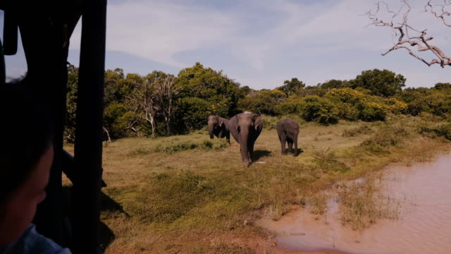 Happy little tourist girl watching family of elephants in the wild from inside safari car on excursion to national park.