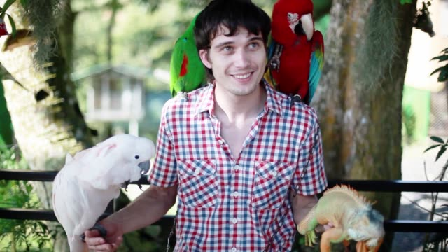 vídeos de stock e filmes b-roll de happy man holds blue-gold macaw parrot white parrot macaw and iguana in koh samui park. 1920x1080 - animal doméstico