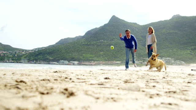 happy mature couple playing with dog on the beach - quarantenne video stock e b–roll