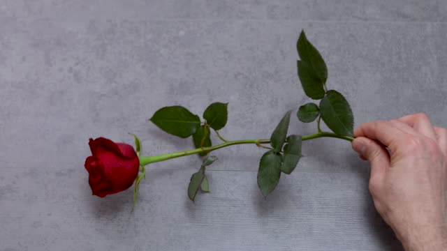 Happy Mother's Day Message With Red Rose 4K Video