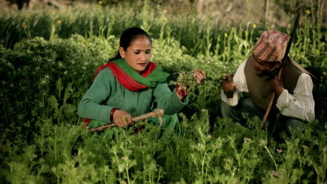 彼らの農場のネパール農民の幸せカップル。 - ネパール人点の映像素材/bロール