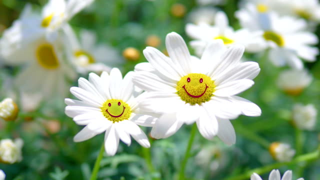 Happy positive flowers smiling at the camera in 4K Slow motion 60fps video