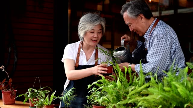 Happy senior couple watering potted plant at cafe Senior man watering potted plant held by woman. Elderly business couple working together. They are in restaurant. focus on foreground stock videos & royalty-free footage