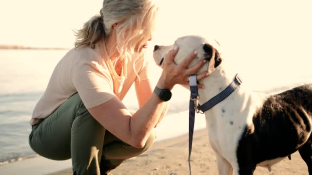 vídeos de stock e filmes b-roll de happy senior woman petting dog on the beach at sunset - mulheres maduras