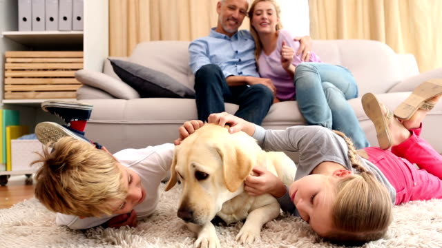 Happy siblings petting labrador on rug video