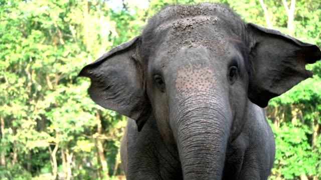 4k happy thai elefant schwankend und essen. - tiere stock-videos und b-roll-filmmaterial