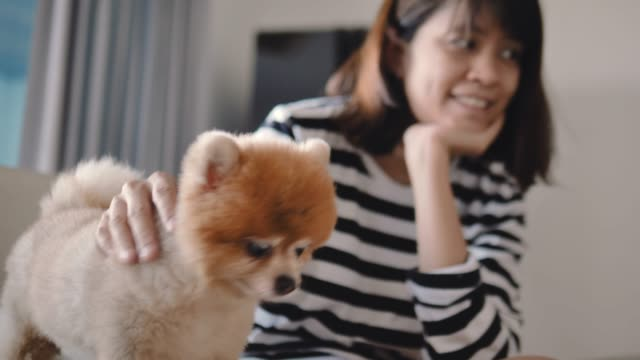 Happy Woman playing with Her Dog on sofa. video