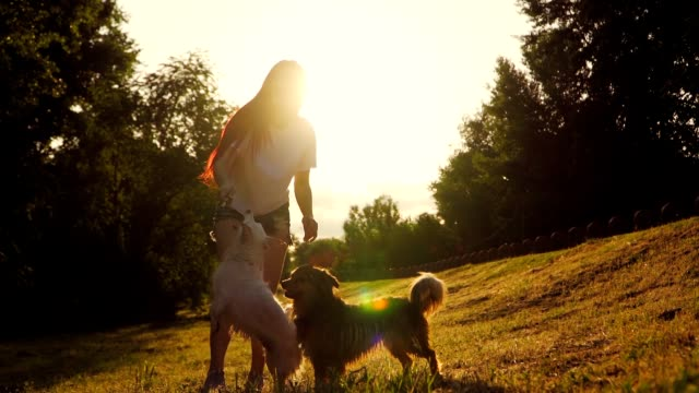 happy woman playing with two dog in the park on background beautiful sunset. beautiful girl play with a puppy in on lawn in the park. love for pets. slow motion. - fedeltà video stock e b–roll