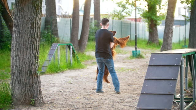 Happy young man whirling a red irish setter in arms on playground at summer park Happy young man whirling a red irish setter in arms on playground at summer park, slow motion irish setter stock videos & royalty-free footage