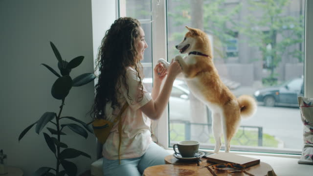 vídeos de stock e filmes b-roll de happy young woman dancing with pet dog sitting on window sill in cafe having fun - pets