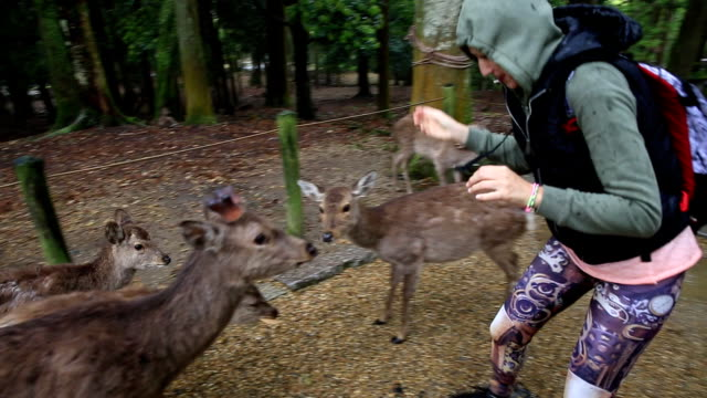 harassing nara deer - wildlife travel stock videos and b-roll footage