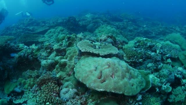 vídeos y material grabado en eventos de stock de colonia coral duro, coral submarino - sea life park