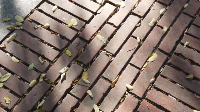 Hardwood leaves poured into the road