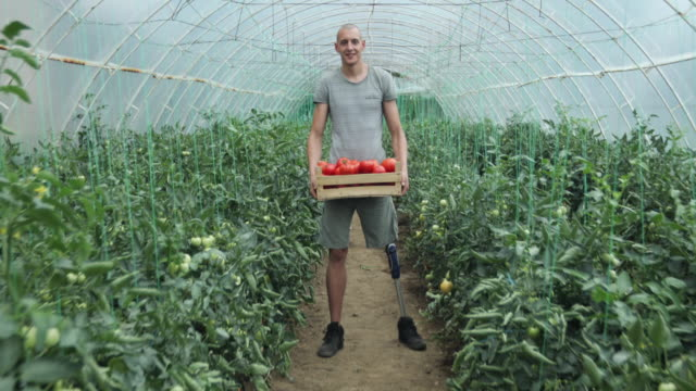 Hardworking disability guy on farm One disability man working on a tomato farm indoors in greenhouse alone. disability stock videos & royalty-free footage