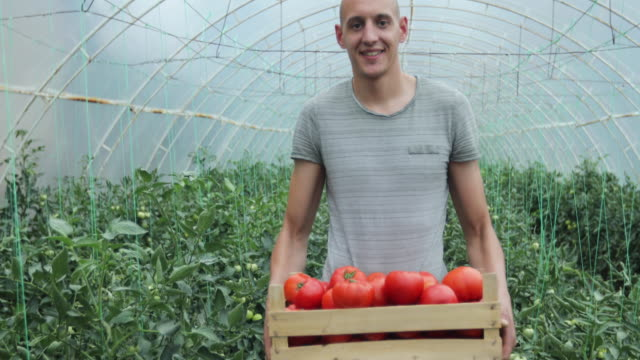 Hardworking disability man on farm One disability man working on a tomato farm indoors in greenhouse alone. amputee stock videos & royalty-free footage
