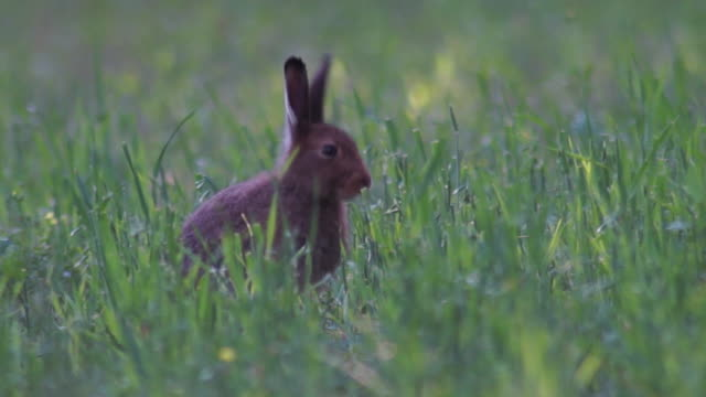 hase - hase stock-videos und b-roll-filmmaterial