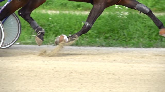 HD SUPER SLOW MO: Harness Horse Running On A Racetrack video