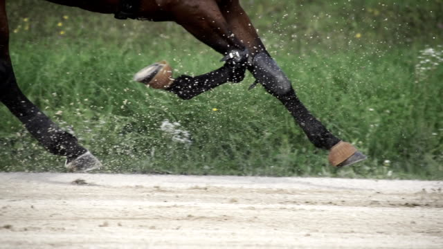 hd-super langsam mo: gurt pferde racing - pferderennen stock-videos und b-roll-filmmaterial