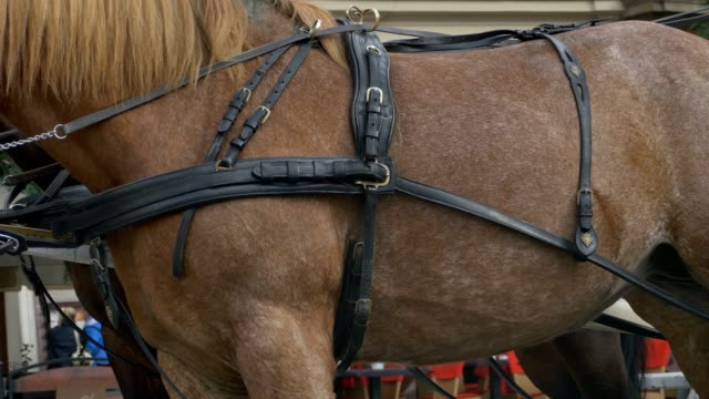 Harness on Horse video