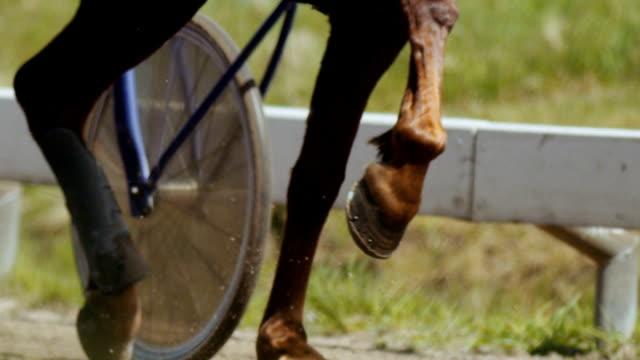 harness racing (slow motion) - horse racing stok videoları ve detay görüntü çekimi