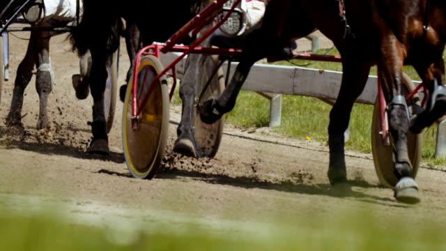 trabrennen (zeitlupe) - pferderennen stock-videos und b-roll-filmmaterial