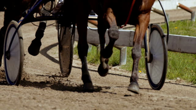 Harness racing (slow motion) video